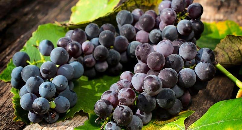 kiedy przycinać winogrona